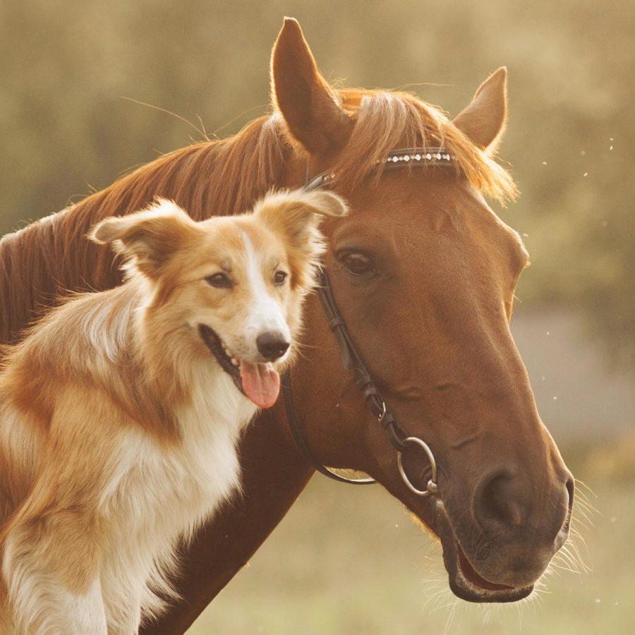 ZAPPSACK für Hund, Katze, Pferd
